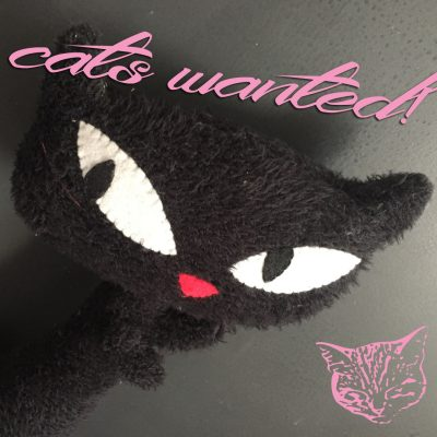 "Cats wanted! Für unser neues Video ""Evil Cat"""